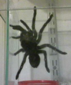 control de plagas arañas
