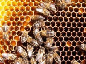 fumigacion de panal de abejas